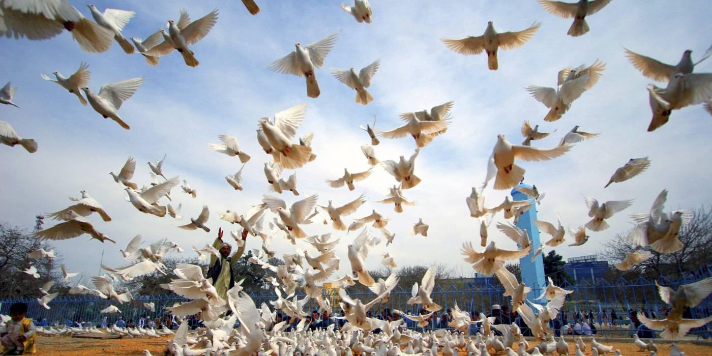 FN, fred og sikkerhet