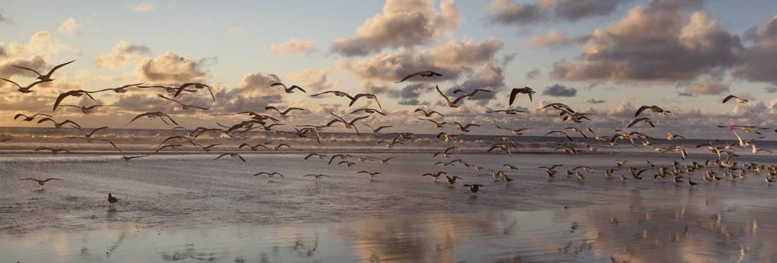 Verdens dag for trekkfugler