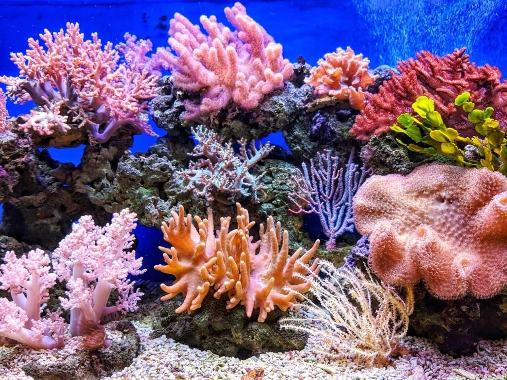 Korallrevet har alle regnbuens farger.