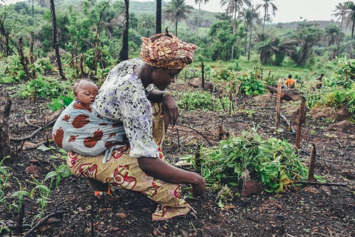 Kvinne i en nedhugget skog,  jordbruk. Foto: Unsplash/Annie Spratt