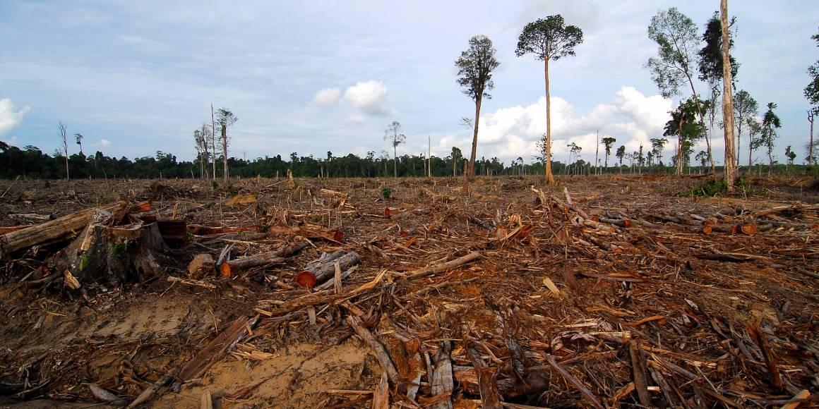 Avskoget område i Malaysia. Foto: Heriyadi Asyari, Regnskogsfondet