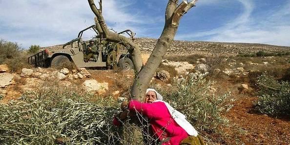 Olivenproduksjon har vært en viktig næringsvirksomhet for palestinerne i mange hundre år, men har lenge vært under hardt press fra den israelske okkupasjonspolitikken. Foto: Frank M. Rafik/Flickr