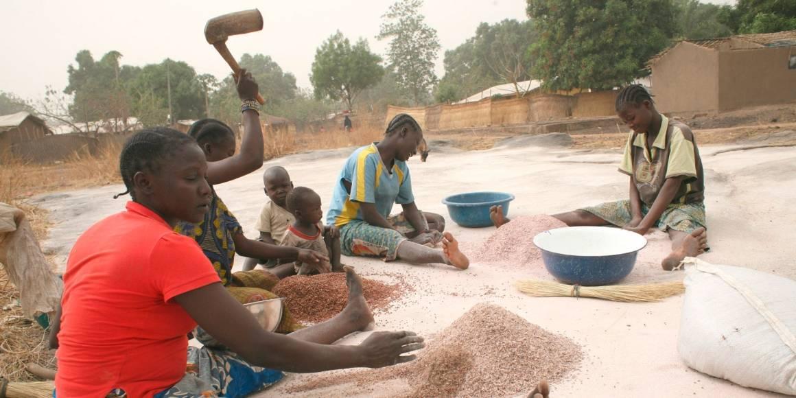 Kvinner i byen Papoa prosesserer hirse. Når folk tvinges til å flykte fra hjemmene sine kan de heller ikke ta seg av avlingene. Konflikter fører derfor også til matmangel blant sivilbefolkningen. IRIN/Anthony Morland