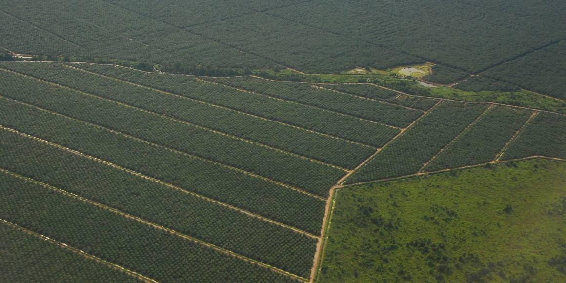 Palmeoljeplantasje i Malaysia sett fra lufta. Foto: Anja Lillegraven/Regnskogfondet